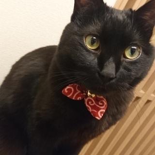 わんぱくで甘えん坊な黒猫の男の子です★