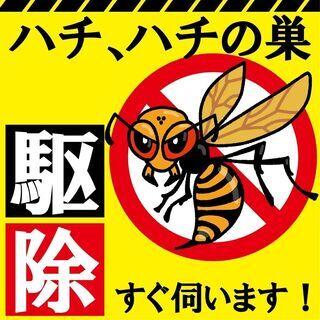 蜂の巣駆除致します♪