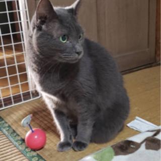 16才 おじいちゃんネコです。ご縁お願い致します。