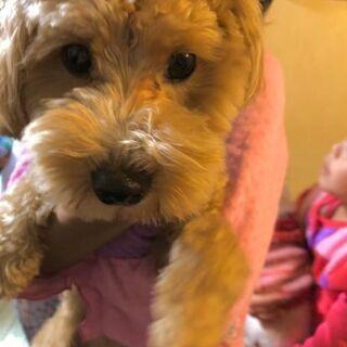 まだ2歳の甘えん坊 MIX犬