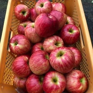 【ネット決済】美味しいりんご(生産者直売)