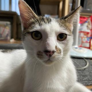 困り顔の可愛いオス猫