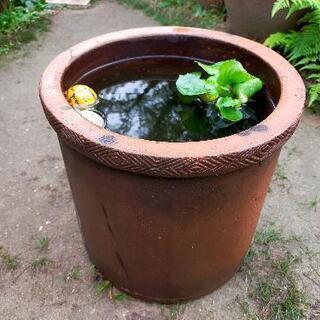 【レア】水鉢•かめ•メダカ鉢‼️♢レトロ♢和風モダン♢ビンテージ...