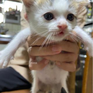 子猫(約1ヶ月)募集しています。