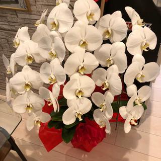 【ネット決済】立派な胡蝶蘭