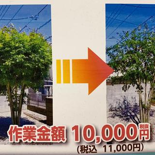 樹木伐採・支障樹木伐採・特殊伐採
