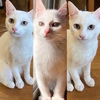 大人しい白猫くん