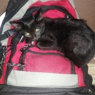 保護した黒猫
