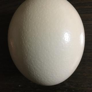 🥚ダチョウの卵の殻🥚