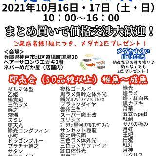 即売会☆品種改良メダカすくいイベント2021年10月16日17日...