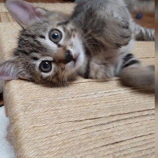 とってもかわいい子猫、男の子「クローバー」