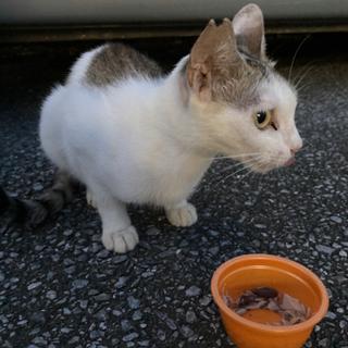 子ネコを保護できる方、募集しています!
