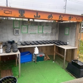 【ネット決済】里山公園前 メダカ無人販売所 里山めだか 10/14出店