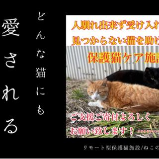 12月に開設予定/保護猫施設です