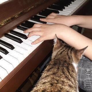コモド音楽教室  ピアノ、エレクトーン等
