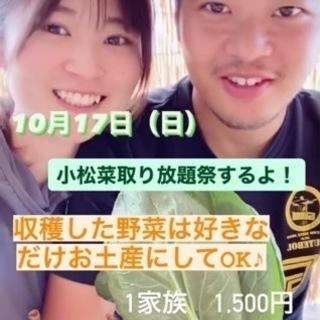 【10/17(日)】小松菜収穫祭★取り放題!