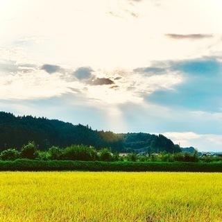 令和3年  新米 栃木県さくら市コシヒカリ30kg 玄米 豊かな...