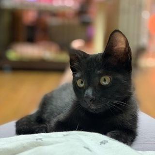 奇跡の黒猫🐈⬛もぐ❤10/17姪浜の譲渡会に参加します❣️