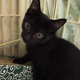 おめめ真ん丸の黒子猫