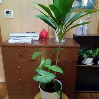 観葉植物🅱21