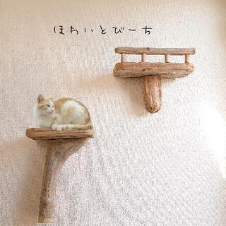【取り引き中】流木キャットタワー・壁用