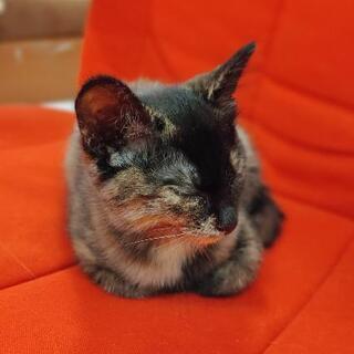 元気なキジトラ系(サビ柄)の子猫ちゃん