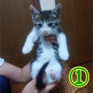 保護猫🌟生後2ヶ月🌟