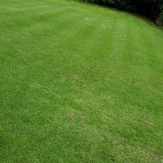 【ネット決済・配送可】庭や駐車場 屋敷周り 空き地全般 草刈り致します