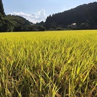 新米ヒノヒカリ 籾 25kg
