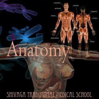 セラピストのための解剖学・運動学