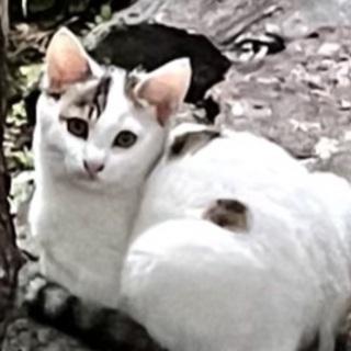 夏に生まれた可愛い子猫