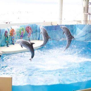 新江ノ島水族館&江の島に無料~半額で行きましょう!