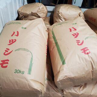 収穫したて★岐阜県ブランド★ハツシモ玄米30kg 令和3年度産 ...