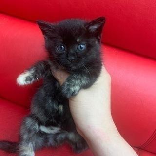 1か月 サビ猫
