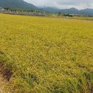 新米令和3年度産 ヒノヒカリ玄米 30㎏
