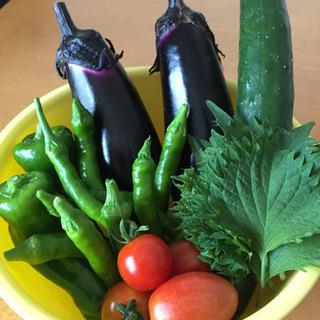 夏野菜詰め合わせ14