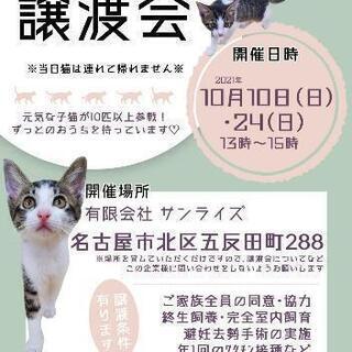 北名古屋さくら猫の会の譲渡会