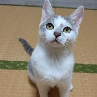 【里親募集】生後6ヶ月、甘えん坊の女の子【猫ちゃん】