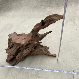飾り木 流木 木