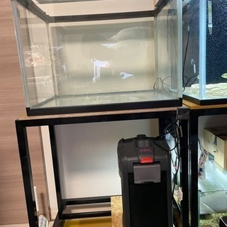 水槽、水槽台、LED、外部フィルターセット