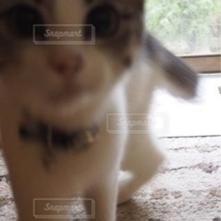 🔴猫じゃらし🔴鬼滅の刃禰󠄀豆子