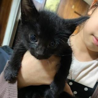 黒猫 子猫