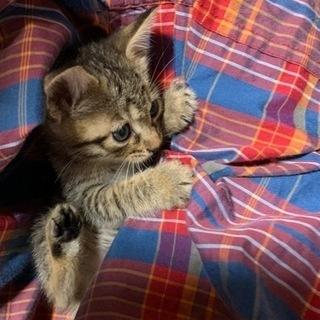 キジ 子猫