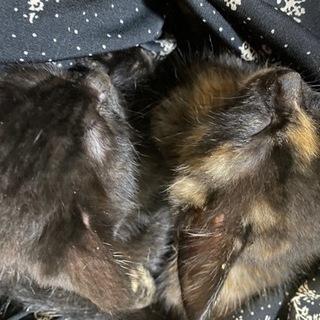 サビand黒猫