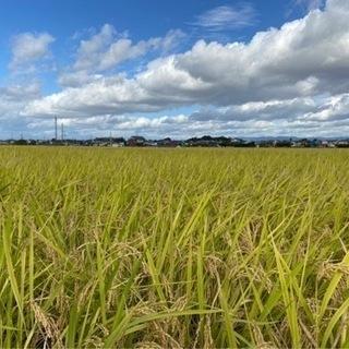 なんと600本❗️❗️令和3年度 奈良県ヒノヒカリ(玄米)