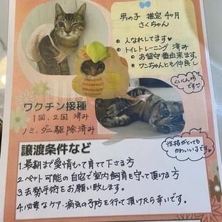 子猫急募集❗️男の子4ヶ月