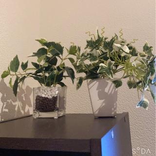 フェイクの観葉植物