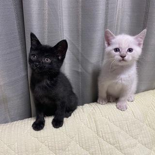 黒猫白猫2匹一緒にお願いします