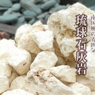 天然琉球石灰岩 1kg 観葉植物 岩 ドライガーデン ロッ…