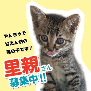 (交渉中)保護した子猫の里親さんを募集中です